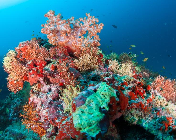 Met Duikreporter Leendert Smit naar de Malediven. Kijk en lees verder op http://www.duikeninbeeld.tv/duikreporter/artikel/leendert-smit-naar-de-maldiven-met-dive-photo-guide/