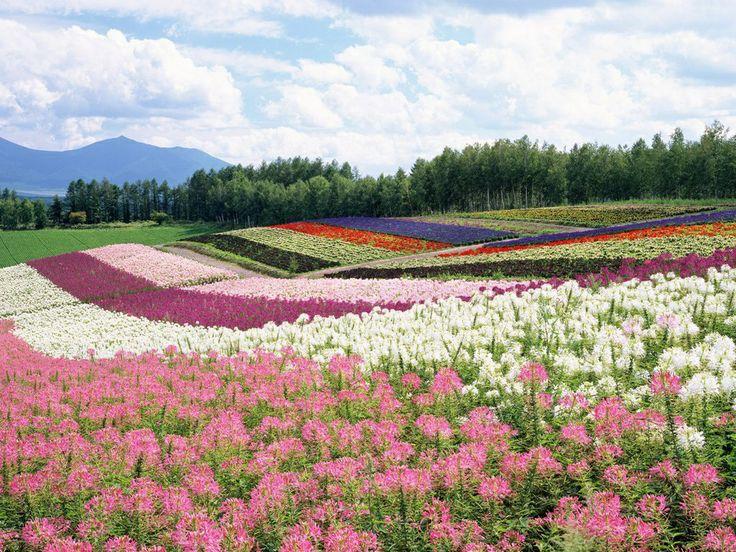 gratis wallpapers - Bloemen landschappen : http://wallpapic.nl/landschappen/bloemen-landschappen/wallpaper-10917