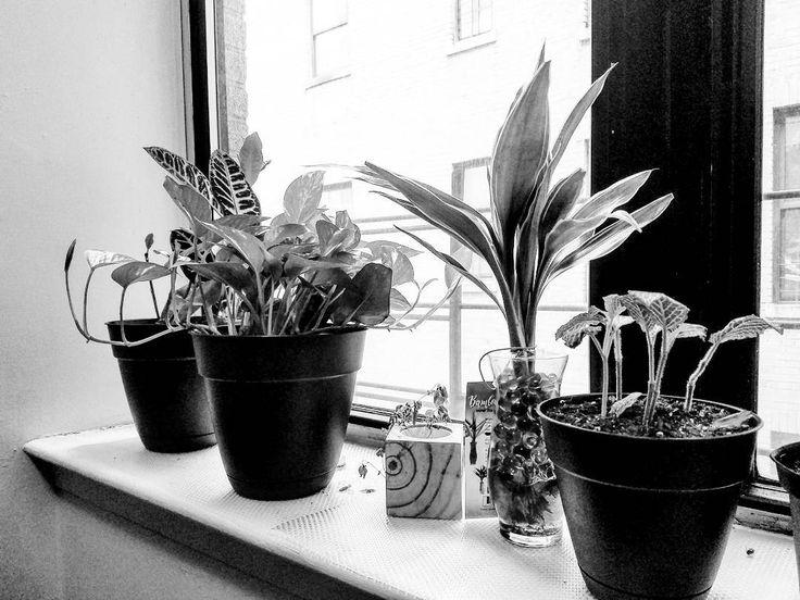 """"""" Y cuando te amo te amo tanto que amo por los dos pero cuando se me va yo no te conozco.""""-#busysolitudenyc #photography #art #itsforthebest #myfriendscanconfirm #ihateneedypeople #truestory #ijustdonthaveitinme #photography #busysolitudenyc #minimalism #minimalist #minimalistlifestyle #mylittlegarden #newyork #nyc #nyny"""
