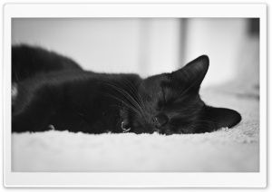 Black Cat HD Wide Wallpaper for Widescreen