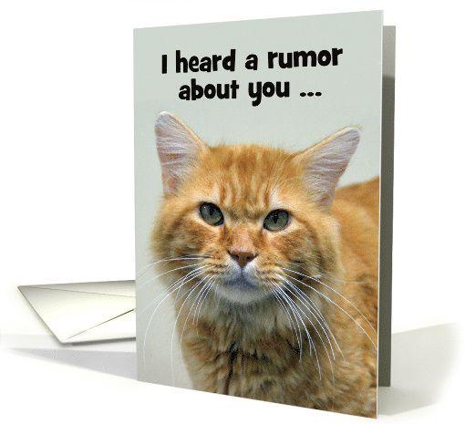 Birthday Orange Cat: De 48 Bästa Cats-bilderna På Pinterest