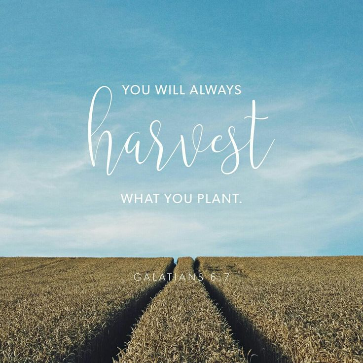 Don't be misled—you cannot mock the justice of God. You will always harvest what you plant. Those who live only to satisfy their own sinful nature will harvest decay and death from that sinful nature. But those who live to please the Spirit will harvest everlasting life from the Spirit. Galatians 6 NLT http://bible.com/116/gal.6.7-8.NLT
