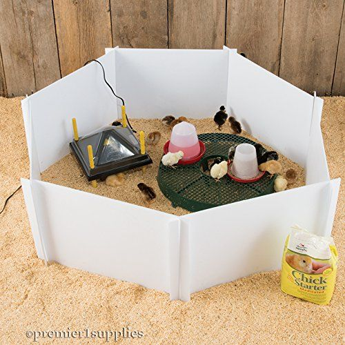 Brooder starter kit for up to 24 chicks makes ordering a brooder simple and easy. No worry about having to 'get everything' for the chicks. Great for rearing chicks for the first few weeks of life wh...