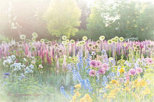 .: Flowers Photography, Photography Magic, Dreams, Georgianna Lane, Whimsical Gardens, Perennials Gardens, Art Prints, Pretty Pastel, Gardens Growing