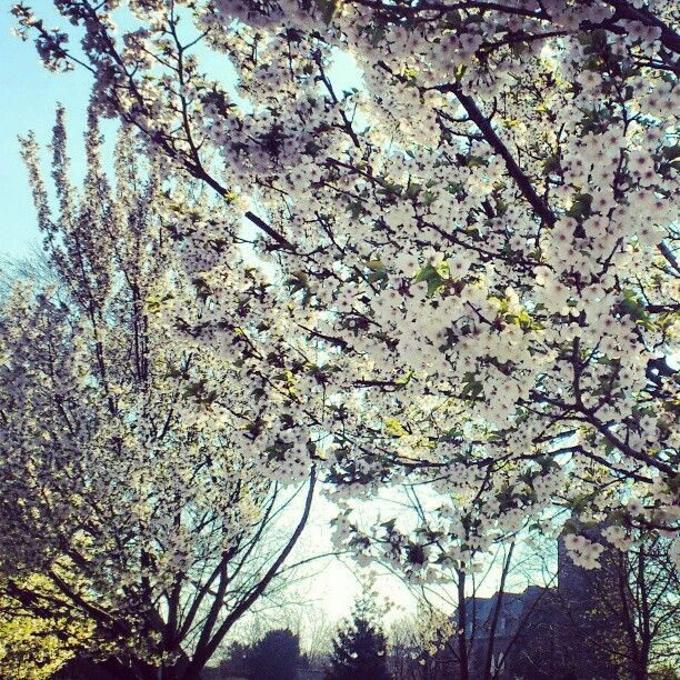 Add the sound of about a million honeybees #springtime