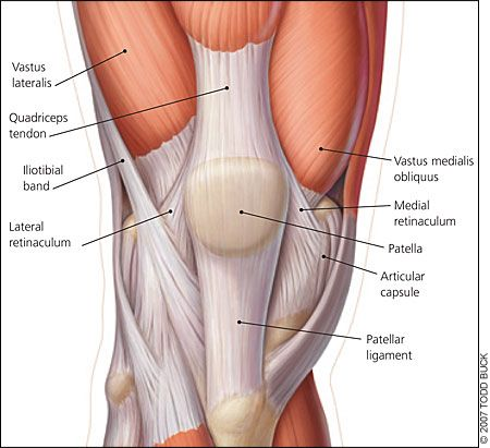 25+ best ideas about anatomy of the knee on pinterest | knee joint, Muscles