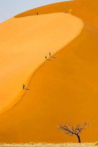 Une fourmi sur .... une dune