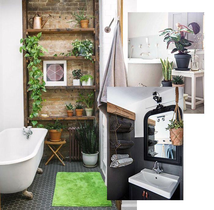 1000 id es sur le th me plantes de salle de bains sur pinterest salle de bains salle de bains. Black Bedroom Furniture Sets. Home Design Ideas