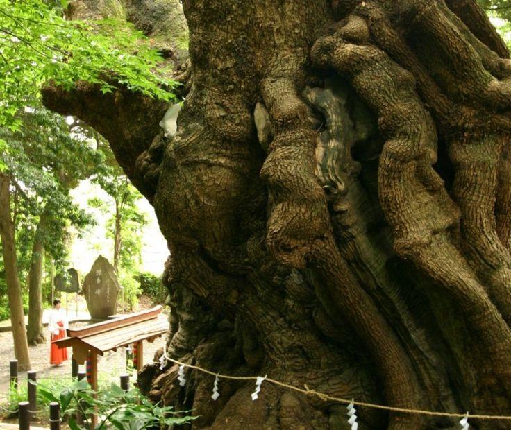 熱海でおすすめの観光スポット173ヶ所をセレクト!人気の来宮神社の大楠や熱海梅園などを口コミランキングでご紹介。熱海周辺で観光スポットを探すならじゃらんnet。