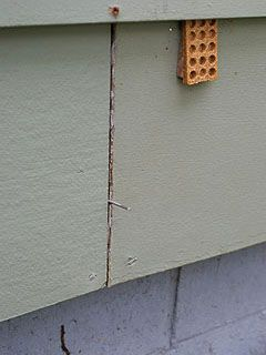 Nail used as spacer between adjacent pieces of siding.
