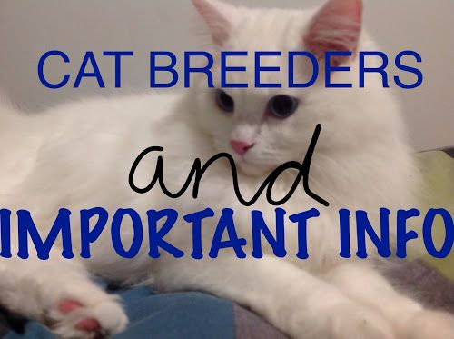 #new #blog #post! Cat breeders and cat information, IMPORTANT stuff everyone, even YOU should know.
