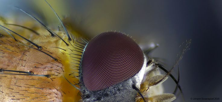 Extreme macro photograph by Johann Swanepoel