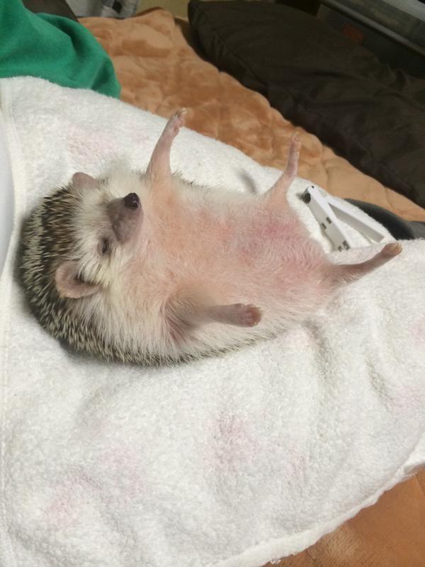 ハリネズミの爪切り→睡眠コンボ