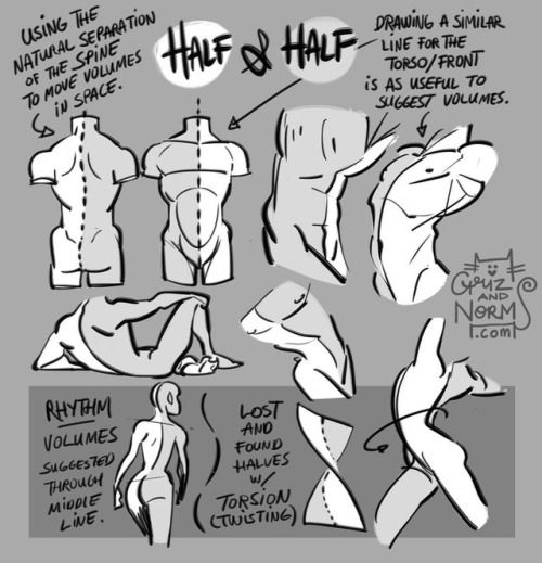 Tuesday Tips - Half and Half A technique I apply to help me draw the torso/hips area as well as the face. Splitting it in half helps me compare the width of mirrored features on the the other half. Also very useful when the body twists and folds on...