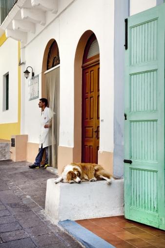 Stock-Fotografie: Sleeping dog Salina Island Aeolian islands Sicily Italy