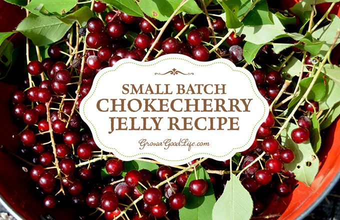 This small batch of chokecherry jelly only requires one pound of foraged chokecherries. It is a perfect balance of tart and sweet flavor.