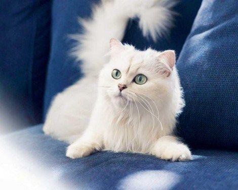 Fotos de gatos pequeños