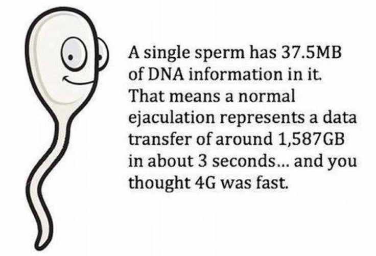 Who is faster? A sperm has 37.5MB os DNA information in it. That means a single ejaculation represents a datatransferof around 1587 GB in about 3 seconds.