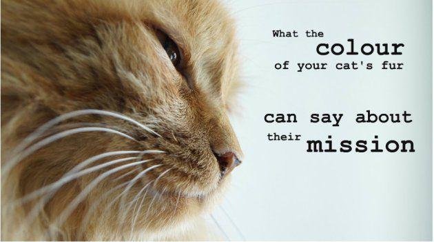 orange cat kate sitka pet psychic