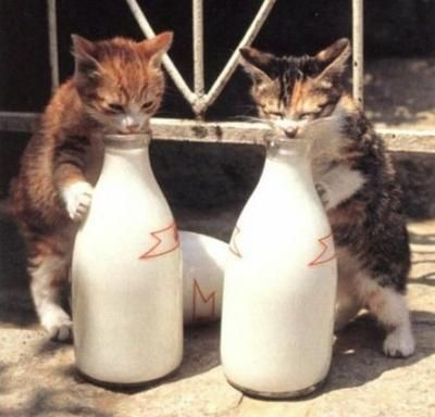 Welcome to Cat Heaven Pictures, Funny Pictures, MySpace Pictures
