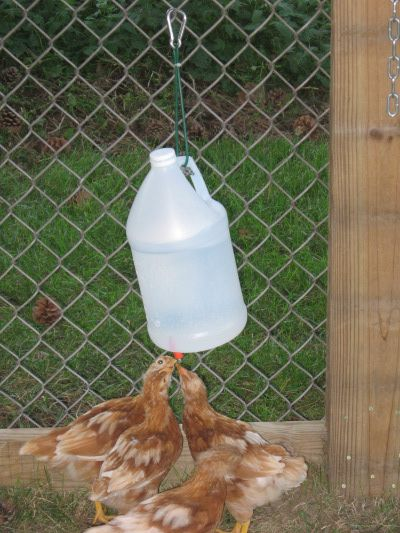 The 25 Best Chicken Waterer Ideas On Pinterest Chicken