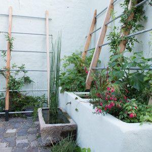 klimplantenrek kleine tuin