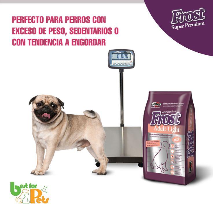 Si tu perro tiene tendencia a engordar puedes darle Frost adult Light... Libre de maiz, soya y transgénicos. De venta en nuestra tienda!  Best for Pets