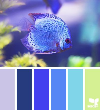 Color Swim - http://design-seeds.com/index.php/home/entry/color-swim6