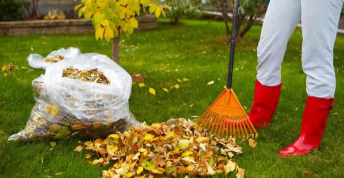 Are You Searching For The Best Yard Cleanup Services Provider