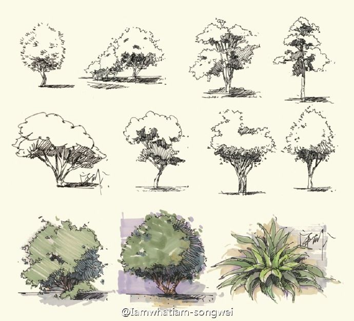 tree sketchesdrawing treescroquislandscapingarchitectural - Architecture Drawing Of Trees