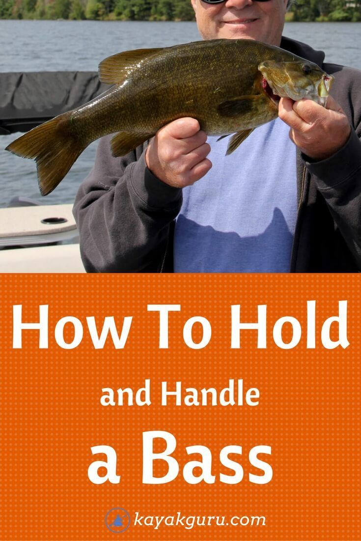 How To Hold And Handle A Bass Largemouth Smallmouth Bass Fish Bass Fishing Bass Fishing Tips Fish