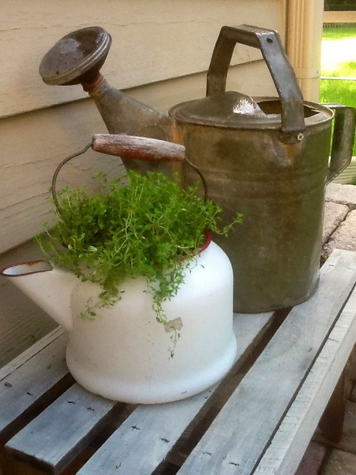 Old tea pot filled with thyme....wish I had kept Grandma Mason's old tea pot!