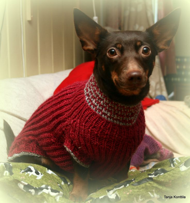 Dog jumper with dogstooth cowl