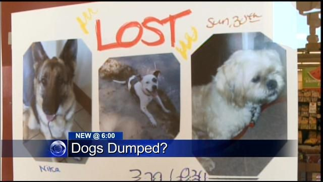CALIFORNIA SOS - SACRAMENTO, CA - SAN JOAQUIN COUNTY 2 DOGS STILL MISSING: A GERMAN SHEPHERD & A MALTESE!!! PLEASE SHARE!! IT HAS BEEN EXTREMELY HOT! OVER 100 DEGREES!!! BELLA THE PIT BULL IS BACK HOME :) San Joaquin County Deputy Admits To Dumping Dogs In Field During Heat Wave « CBS Sacramento http://sacramento.cbslocal.com/2013/07/03/san-joaquin-county-deputy-admits-to-dumping-dogs-in-field-during-heat-wave/
