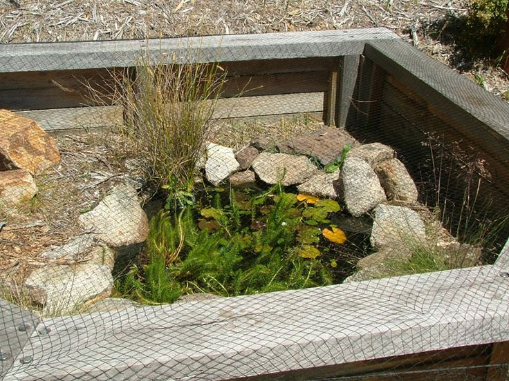 outdoor turtle enclosure with pond