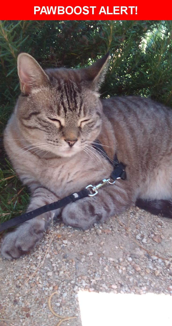 Please spread the word! Simba was last seen in Tujunga, CA 91042.  Description: REWARD Simba is microchiped 10 years old looks younger healthy medium size blue eyes he is my service animal ESA (emotional support animal)  Nearest Address: sunland tujunga mcdonalds parking lot connecting to Leolang Street