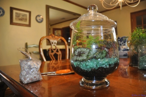 Terrariums are easy to build and enjoy.