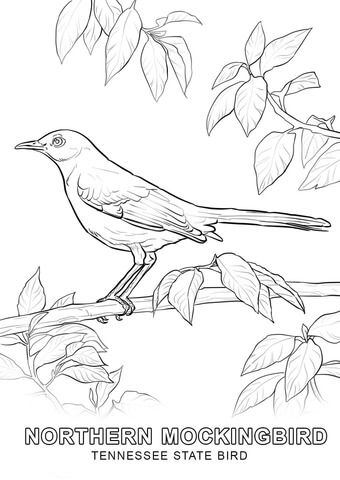 8 best State flowers, etc images on Pinterest Coloring books - copy northern mockingbird coloring pages