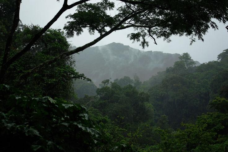 Bwindi National Park (Impenetrable Forest) - Uganda.