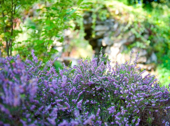 Cowley Manor & Spa Garden