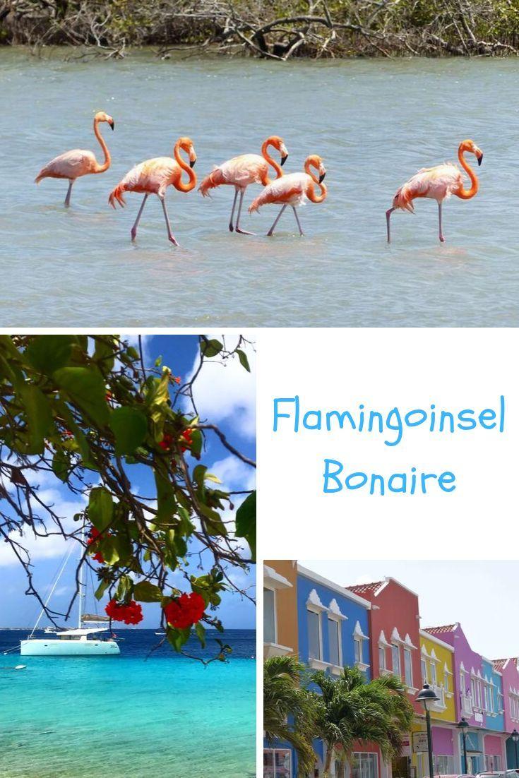 Bonaire Wer A Sieht Muss Auch B Sehen In 2020 Familienurlaub Reisen Familien Urlaub