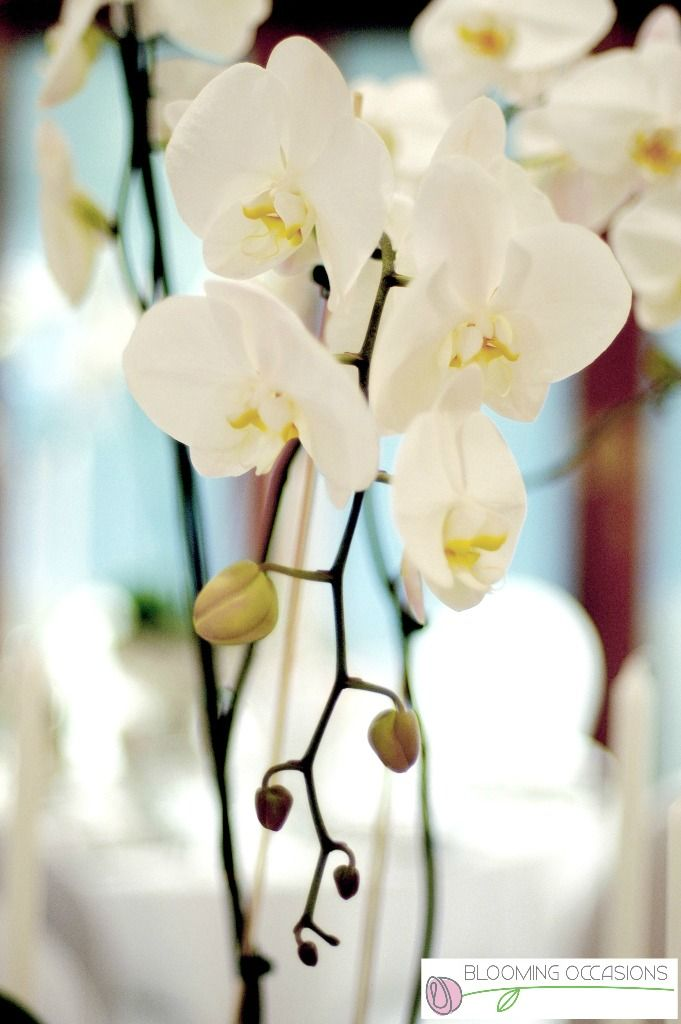 #weddingflorist #weddingflowers #weddingdecor #weddinghair #weddingmakeup #weddingphotography #weddingplanner #TheWeddingProvider  http://www.theweddingprovider.co.za//p/649928/blooming-occasions--florist-and-wedding-services  https://www.facebook.com/bloomingoccasionssa