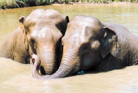 The Elephant Sanctuary : Hohenwald Tennessee