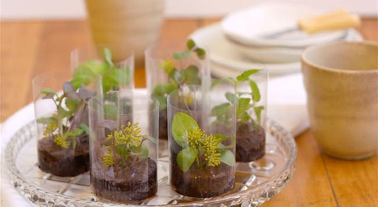 Edible chocolate worlds. No recipe, just make chocolate mousse and top with edible flowers/microgreens to serve.