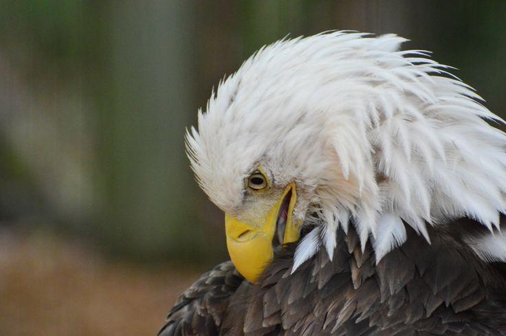 #Eagle #bathtime