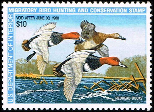 US RW54 Stamp Redhead Ducks Duck Stamp US RW54-1 MNH  (http://www.bmastamps2.com/stamps/united-states/us-rw54-stamp-redhead-ducks-duck-stamp-us-rw54-1-mnh/)