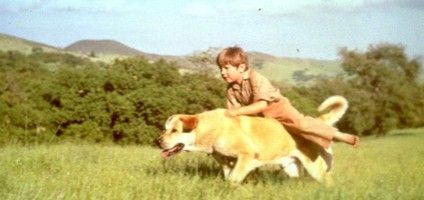 """Does the Dog Die?"" Website Will Spare You From Movies Where Dogs, Well, Die.     Do you turn off Old Yeller before the end so you can pretend that he lived a long and happy life? This is the site for you."