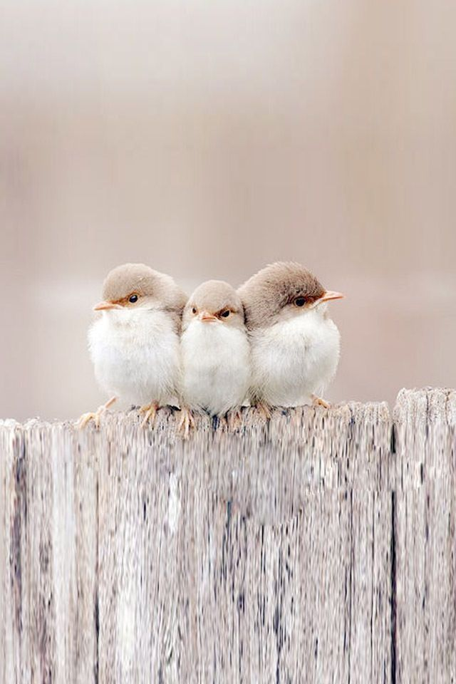 ¡Lindos! 3 amigos...¡con frío!