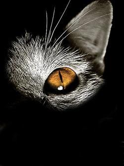Golden Eye photos, bestofpinterest, greatshots, https://facebook.com/apps/application.php?id=106186096099420