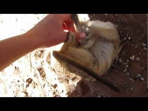 WATCH: Funny Meerkat Video: Ticklish Meerkat!